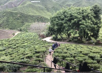 madrasah-irsyadul-quran-cameron-highland-bharat-tea-valley-19