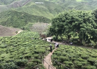 madrasah-irsyadul-quran-cameron-highland-bharat-tea-valley-22