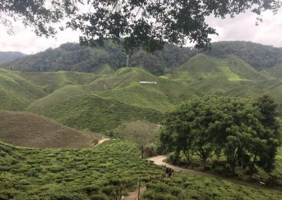 madrasah-irsyadul-quran-cameron-highland-bharat-tea-valley-23