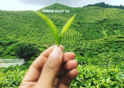 madrasah-irsyadul-quran-cameron-highland-bharat-tea-valley-37